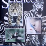 Science Physics PACE 1141